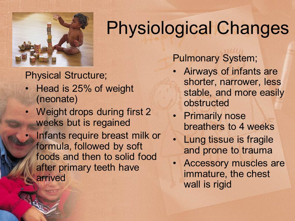 Physiological Changes Physical Structure; Head is 25% of weight (neonate) Weight drops during first 2 weeks but is regained Infants require breast milk or formula, followed by soft foods and then to solid food after primary teeth have arrived Pulmonary System; Airways of infants are shorter, narrower, less stable, and more easily obstructed Primarily nose breathers to 4 weeks Lung tissue is fragile and prone to trauma Accessory muscles are immature, the chest wall is rigid