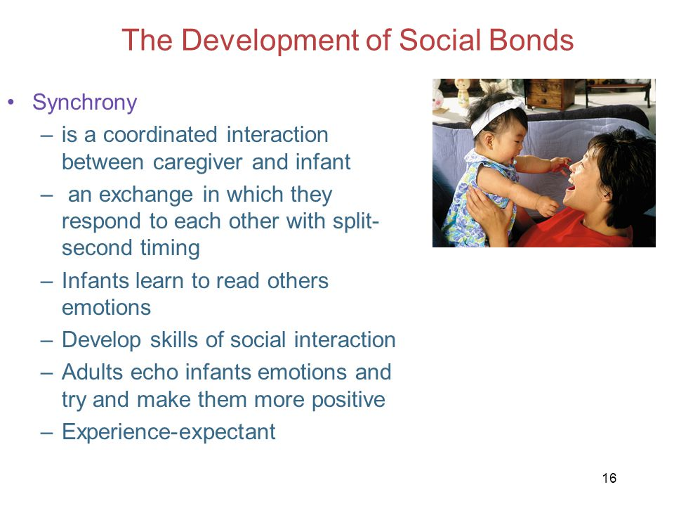 16 The Development of Social Bonds Synchrony –is a coordinated interaction between caregiver and infant – an exchange in which they respond to each ot