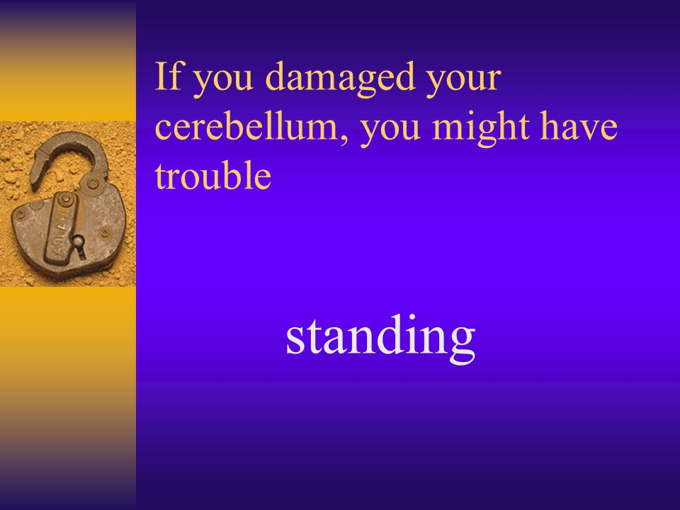 If you damaged your cerebellum, you might have trouble standing