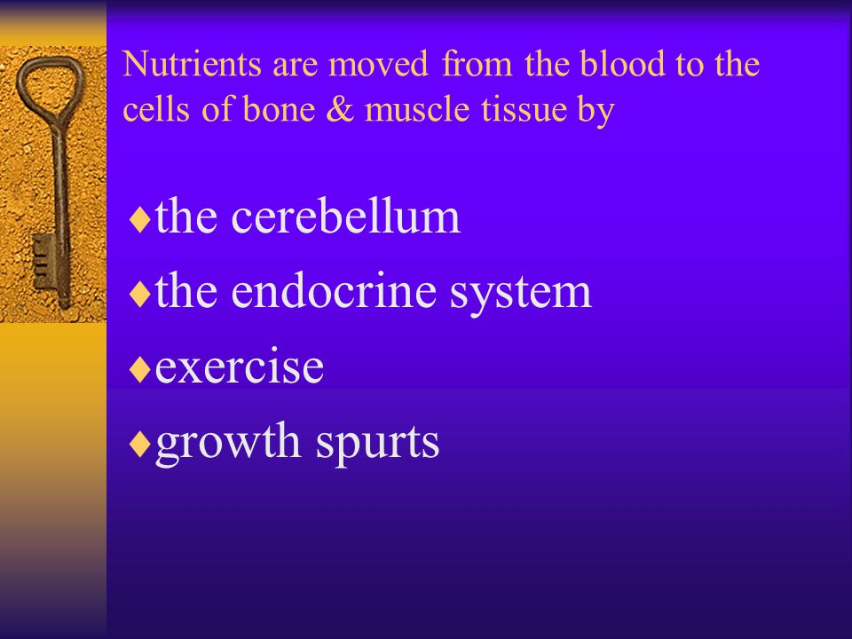 Nutrients are moved from the blood to the cells of bone & muscle tissue by  the cerebellum  the endocrine system  exercise  growth spurts