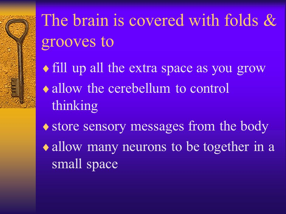 The brain is covered with folds & grooves to  fill up all the extra space as you grow  allow the cerebellum to control thinking  store sensory messages from the body  allow many neurons to be together in a small space