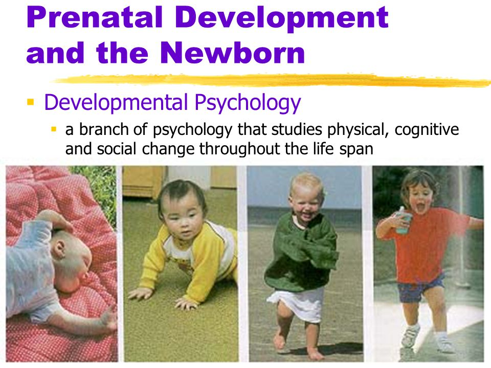 Prenatal Development and the Newborn  Developmental Psychology  a branch of psychology that studies physical, cognitive and social change throughout