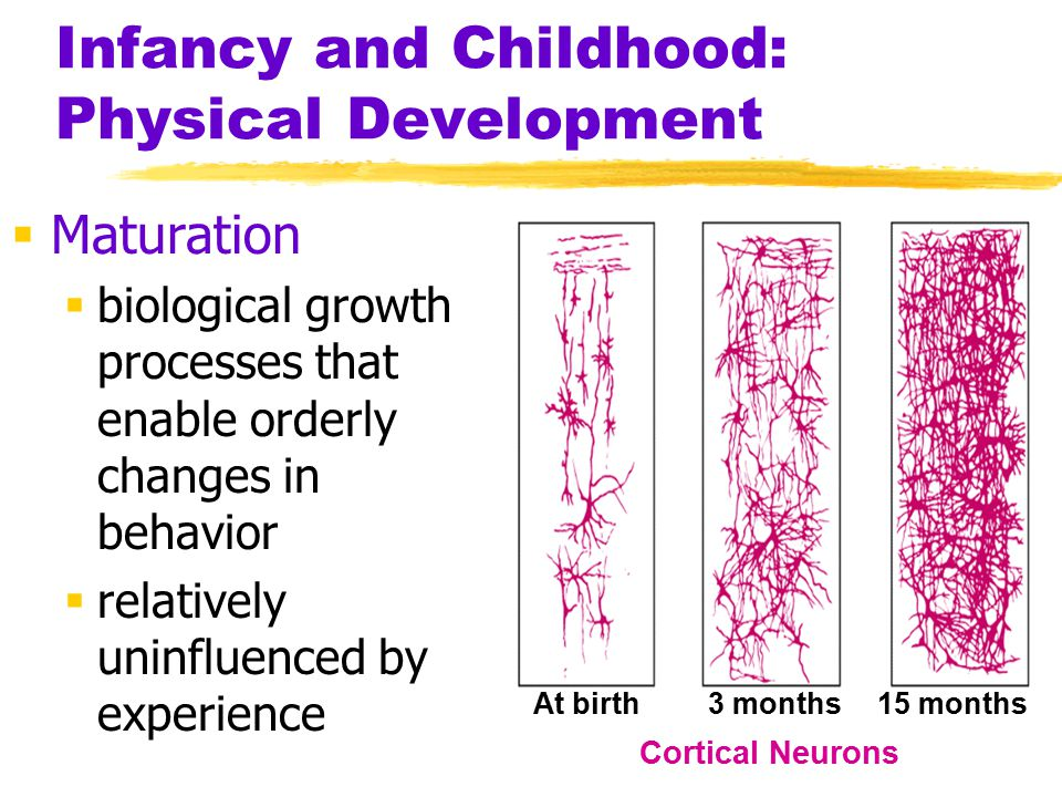 Infancy and Childhood: Physical Development  Maturation  biological growth processes that enable orderly changes in behavior  relatively uninfluenc