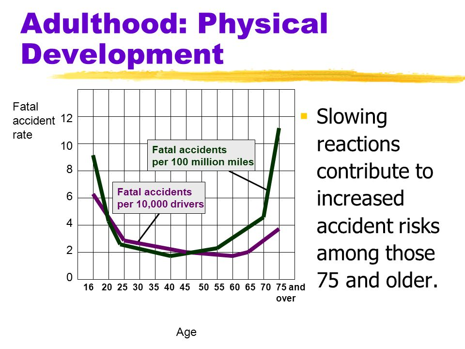 Adulthood: Physical Development  Slowing reactions contribute to increased accident risks among those 75 and older. 12 10 8 6 4 2 0 16202530354045505