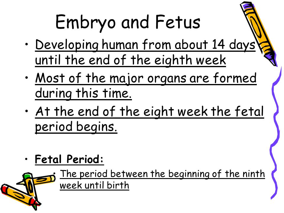 Embryo and Fetus Developing human from about 14 days until the end of the eighth week Most of the major organs are formed during this time.