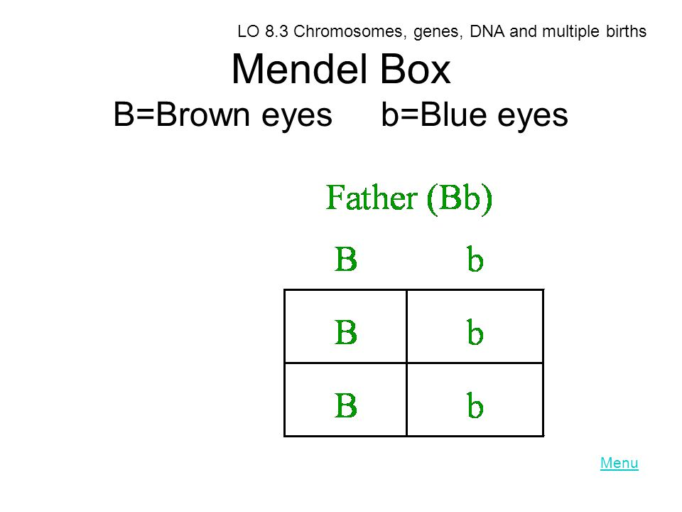 Mendel Box B=Brown eyes b=Blue eyes LO 8.3 Chromosomes, genes, DNA and multiple births Menu