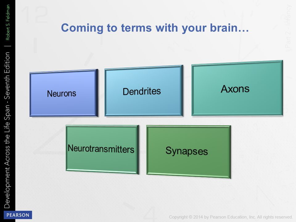 Coming to terms with your brain…