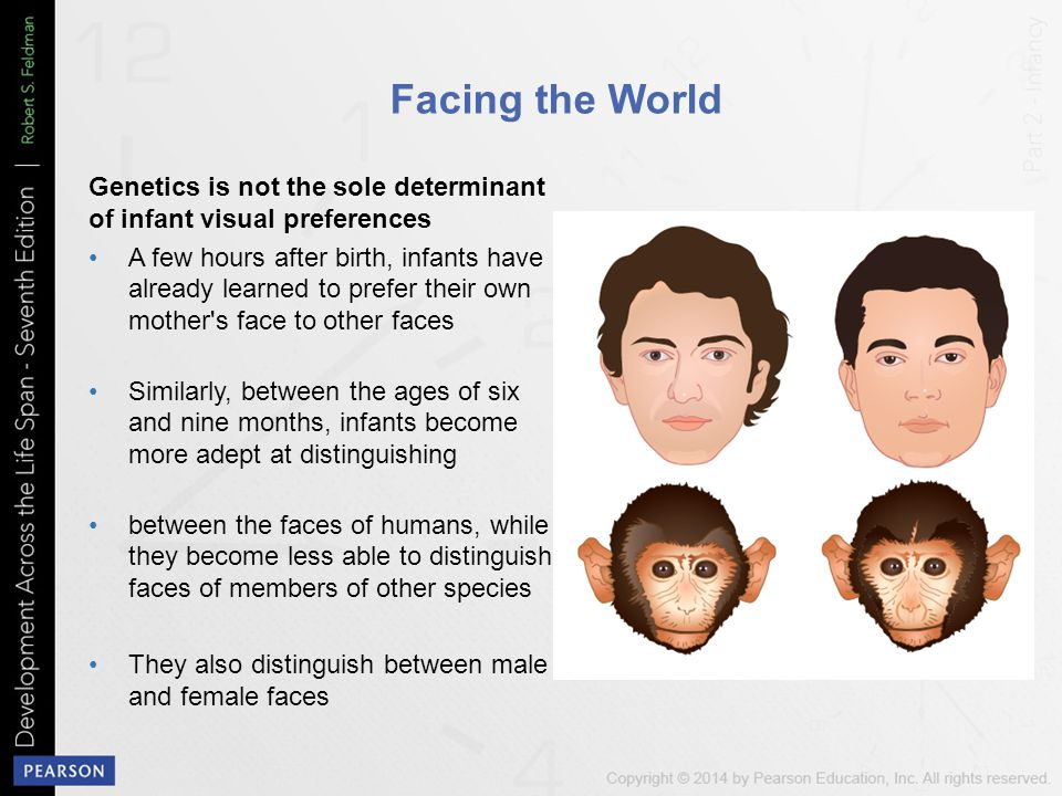Facing the World Genetics is not the sole determinant of infant visual preferences A few hours after birth, infants have already learned to prefer their own mother s face to other faces Similarly, between the ages of six and nine months, infants become more adept at distinguishing between the faces of humans, while they become less able to distinguish faces of members of other species They also distinguish between male and female faces