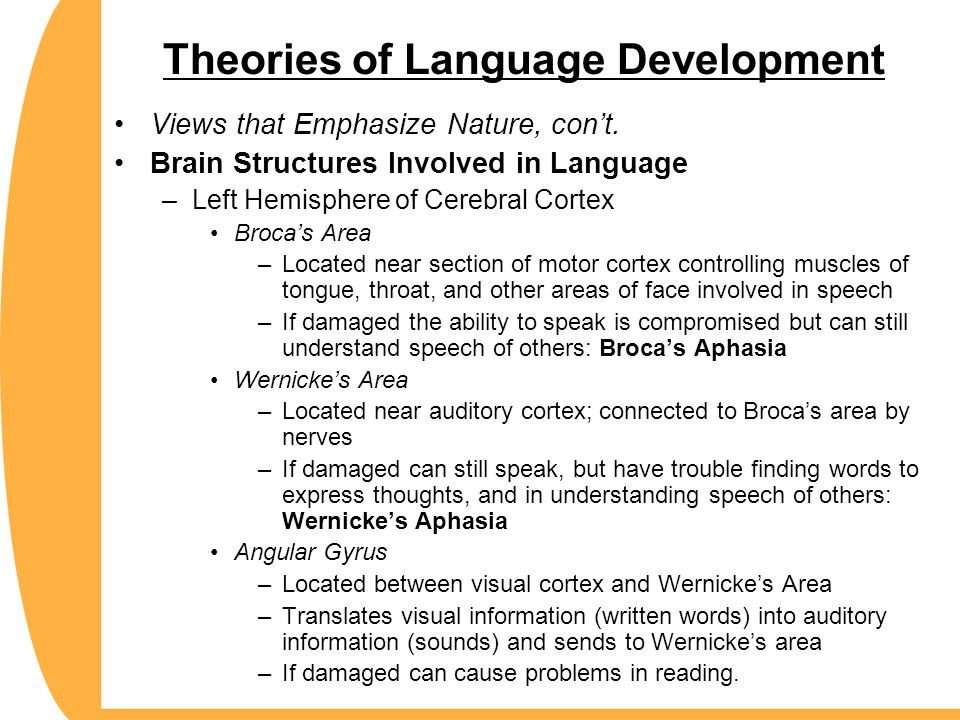 Theories of Language Development Views that Emphasize Nature, con't. Brain Structures Involved in Language –Left Hemisphere of Cerebral Cortex Broca's