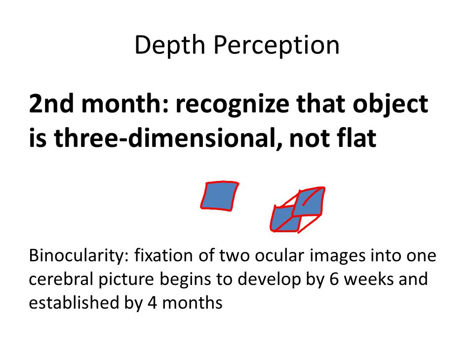 Depth Perception 2nd month: recognize that object is three-dimensional, not flat Binocularity: fixation of two ocular images into one cerebral picture