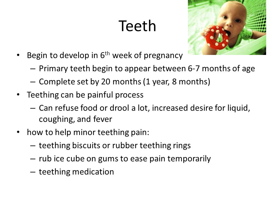 Teeth Begin to develop in 6 th week of pregnancy – Primary teeth begin to appear between 6-7 months of age – Complete set by 20 months (1 year, 8 mont