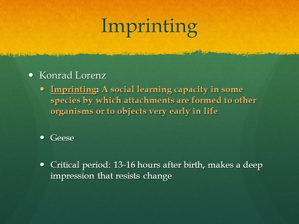 Imprinting Konrad Lorenz Konrad Lorenz Imprinting: A social learning capacity in some species by which attachments are formed to other organisms or to