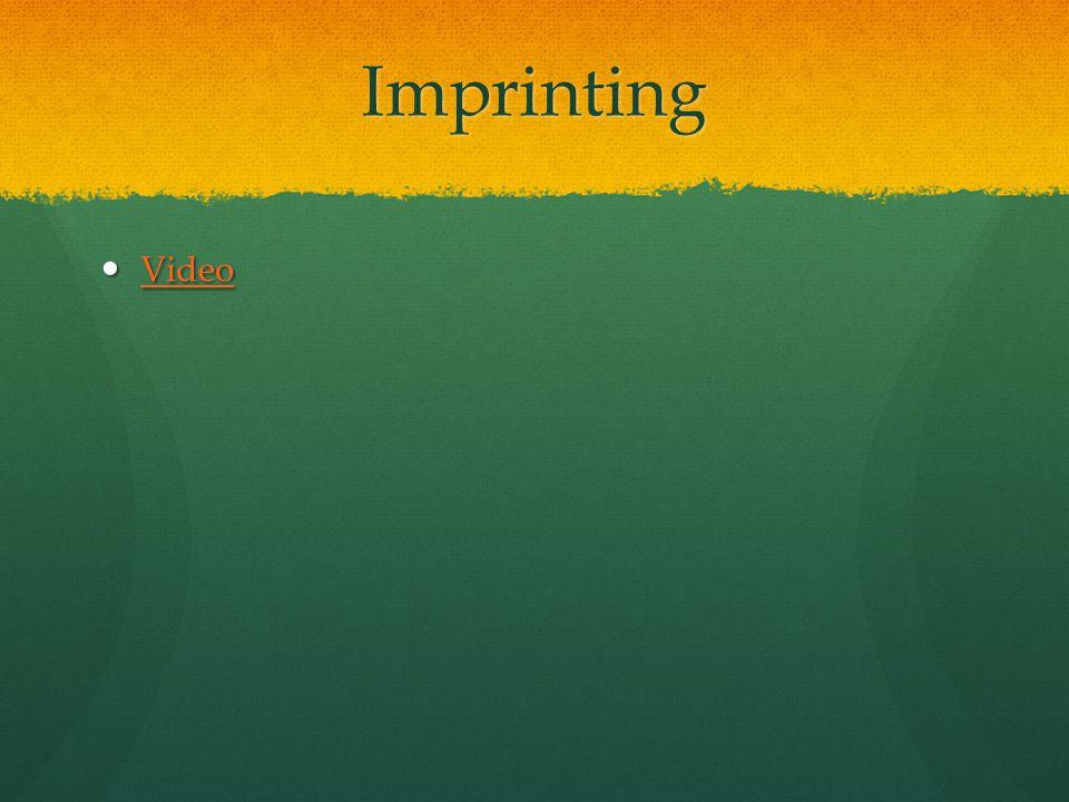 Imprinting Video Video Video