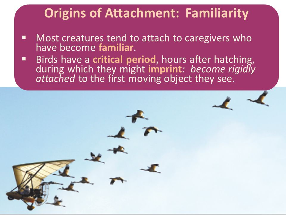 Origins of Attachment: Familiarity  Most creatures tend to attach to caregivers who have become familiar.  Birds have a critical period, hours after