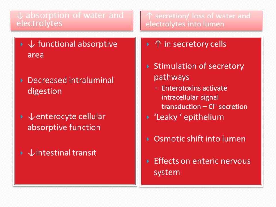 ↓ absorption of water and electrolytes ↑ secretion/ loss of water and electrolytes into lumen  ↑ in secretory cells  Stimulation of secretory pathwa
