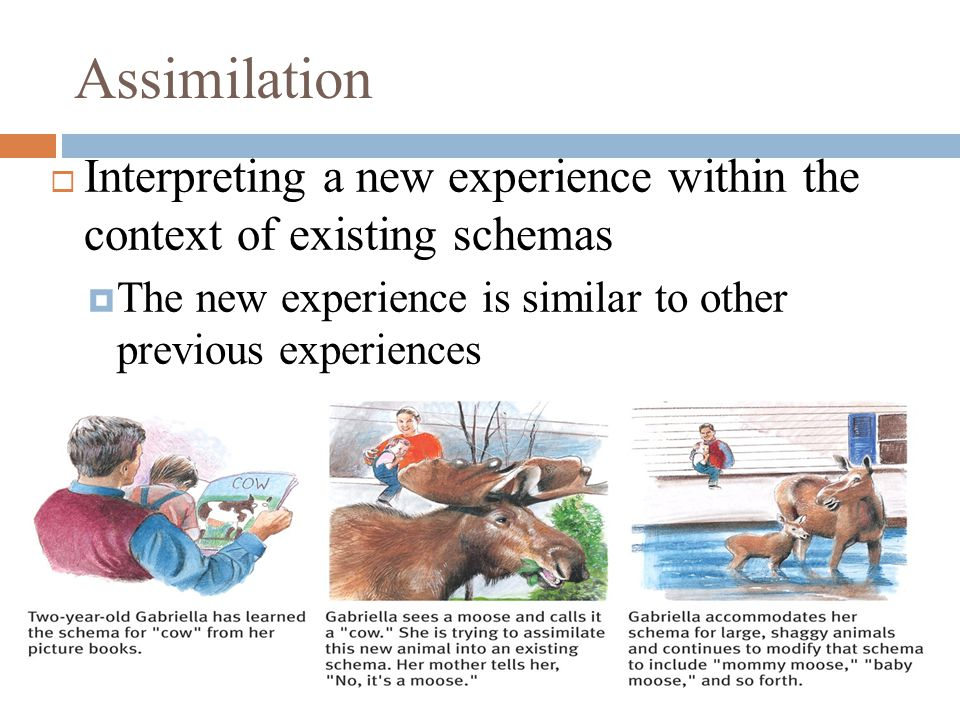 Assimilation  Interpreting a new experience within the context of existing schemas  The new experience is similar to other previous experiences