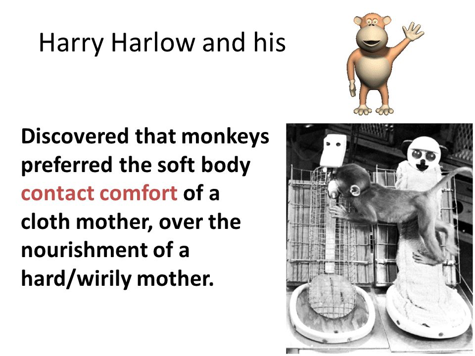 Harry Harlow and his Discovered that monkeys preferred the soft body contact comfort of a cloth mother, over the nourishment of a hard/wirily mother.