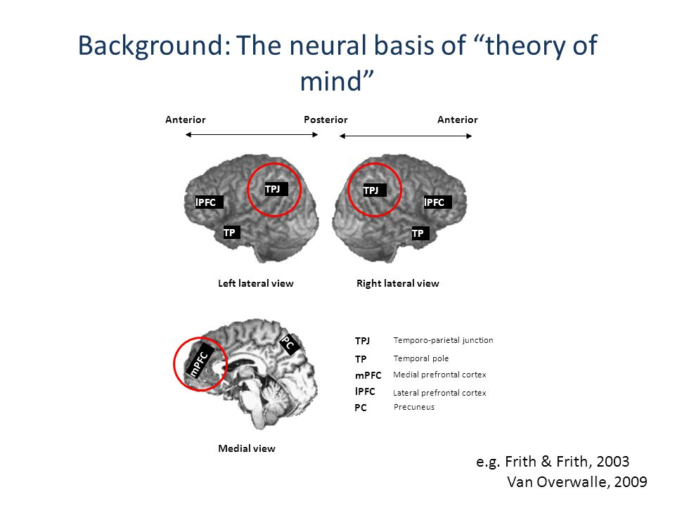 Background: The neural basis of theory of mind Temporo-parietal junction Temporal pole Medial prefrontal cortex Left lateral view TPJ TP Medial view mPFC AnteriorPosterior PC TPJ TP mPFC lPFC Precuneus TPJ TP Anterior lPFC PC Lateral prefrontal cortex Right lateral view e.g.