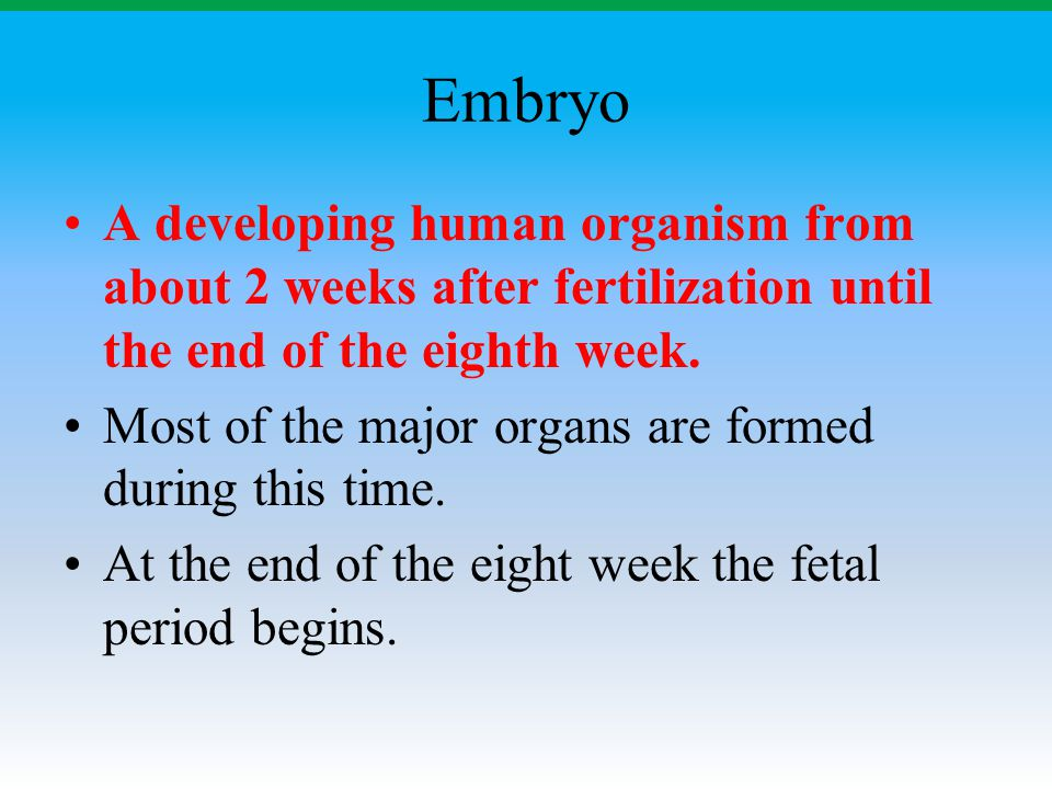 Embryo A developing human organism from about 2 weeks after fertilization until the end of the eighth week. Most of the major organs are formed during