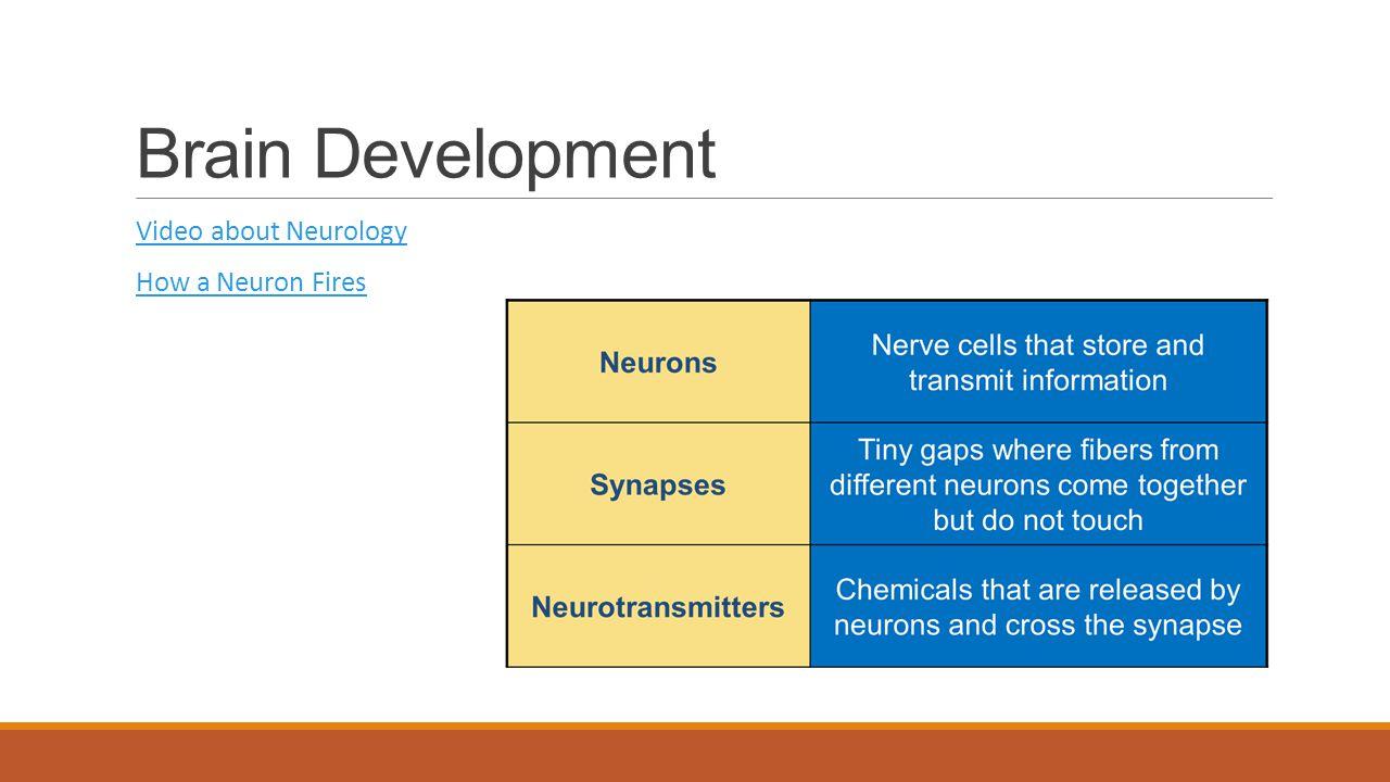 Brain Development Video about Neurology How a Neuron Fires
