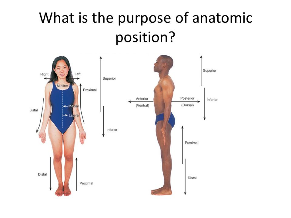 What is the purpose of anatomic position?