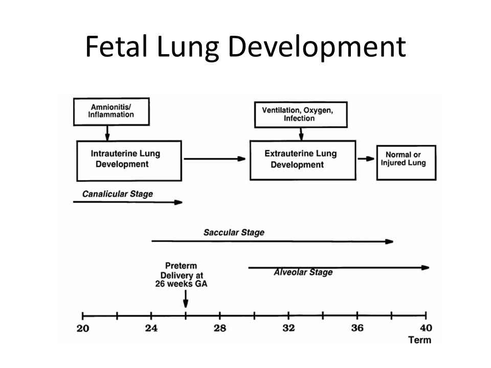 Fetal Lung Development