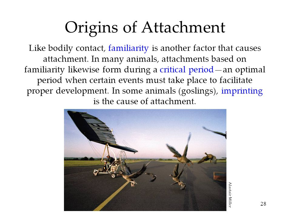 28 Origins of Attachment Like bodily contact, familiarity is another factor that causes attachment. In many animals, attachments based on familiarity