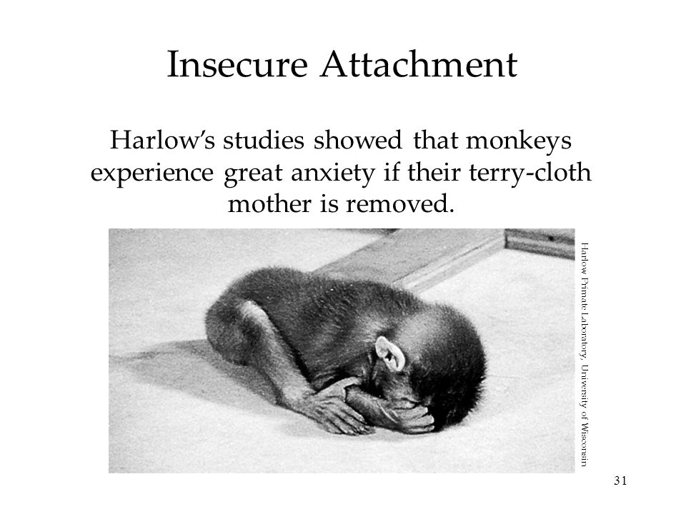 31 Insecure Attachment Harlow's studies showed that monkeys experience great anxiety if their terry-cloth mother is removed. Harlow Primate Laboratory