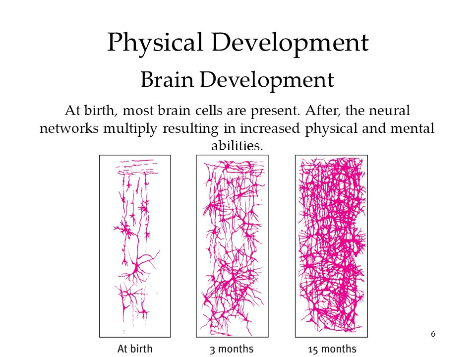 6 At birth, most brain cells are present. After, the neural networks multiply resulting in increased physical and mental abilities. Physical Developme