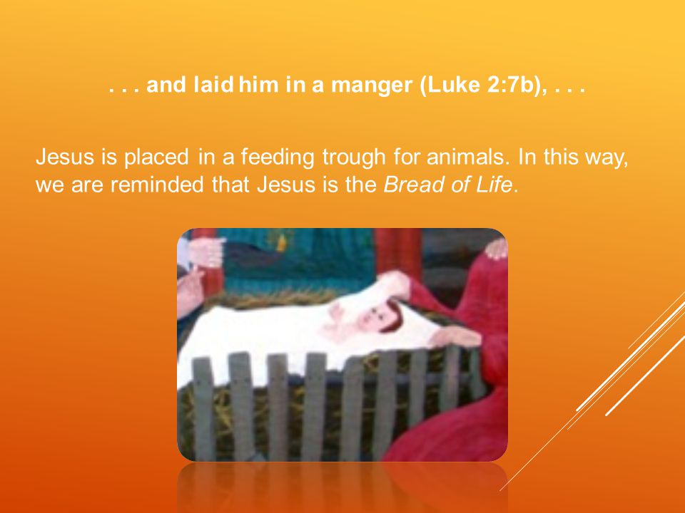 ... and laid him in a manger (Luke 2:7b),... Jesus is placed in a feeding trough for animals.
