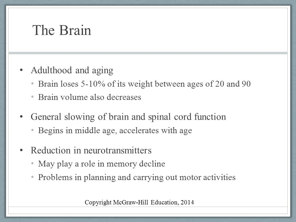The Brain Adulthood and aging Brain loses 5-10% of its weight between ages of 20 and 90 Brain volume also decreases General slowing of brain and spina