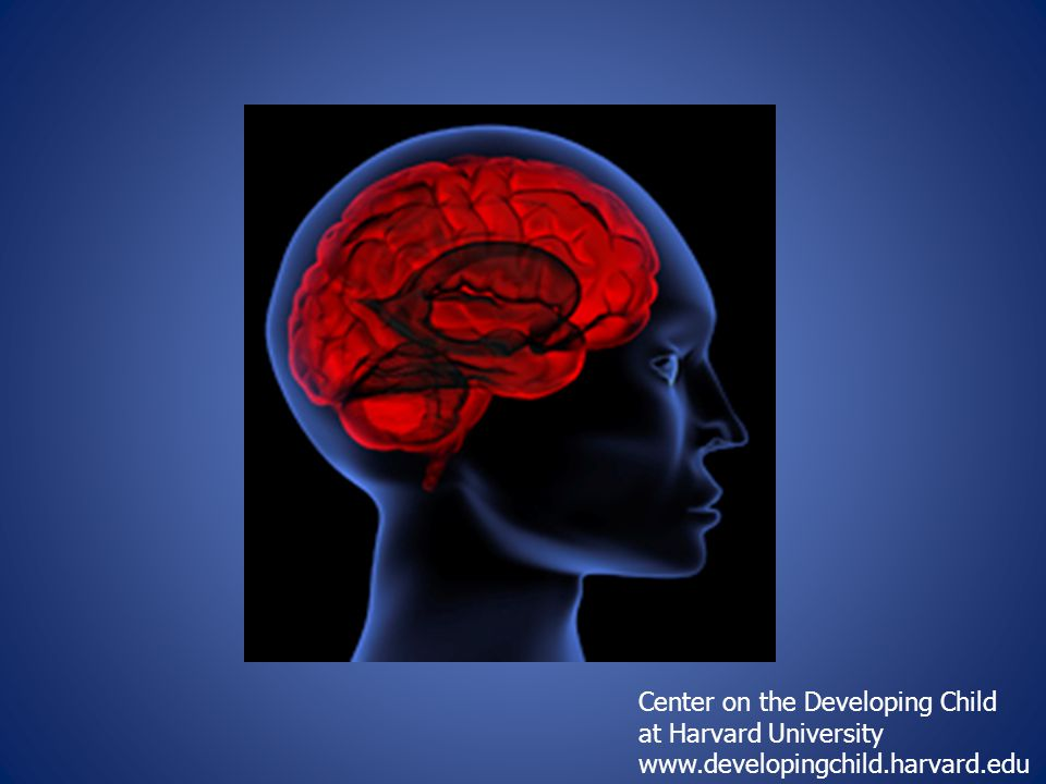 Center on the Developing Child at Harvard University www.developingchild.harvard.edu