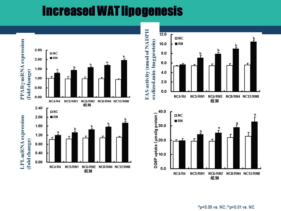 Increased WAT lipogenesis a p <0.05 vs. NC; b p <0.01 vs.