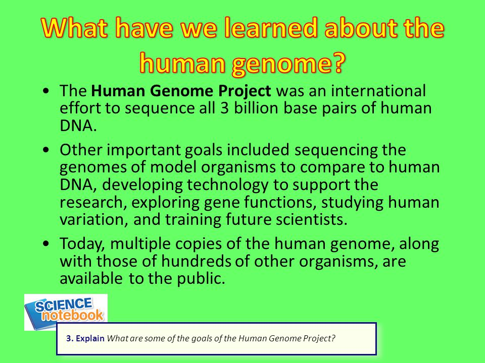 The Human Genome Project was an international effort to sequence all 3 billion base pairs of human DNA. Other important goals included sequencing the