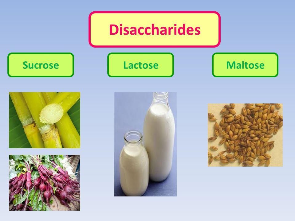 Disaccharides SucroseLactoseMaltose