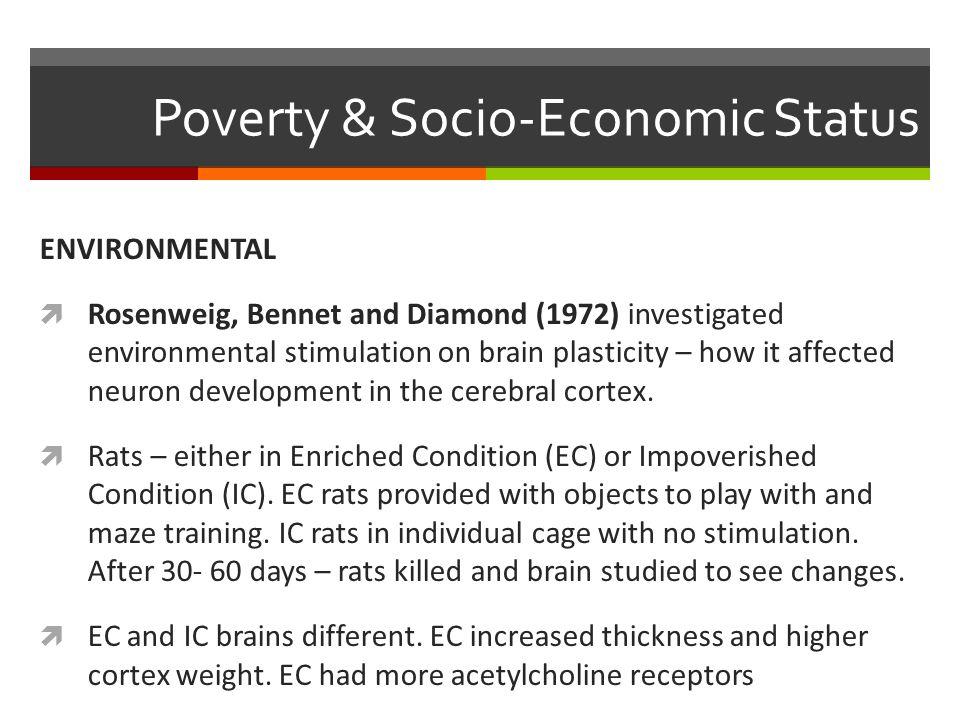 Poverty & Socio-Economic Status ENVIRONMENTAL  Rosenweig, Bennet and Diamond (1972) investigated environmental stimulation on brain plasticity – how it affected neuron development in the cerebral cortex.
