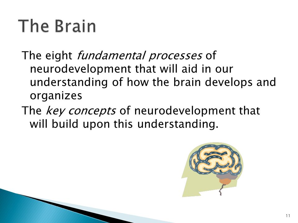 The eight fundamental processes of neurodevelopment that will aid in our understanding of how the brain develops and organizes The key concepts of neu