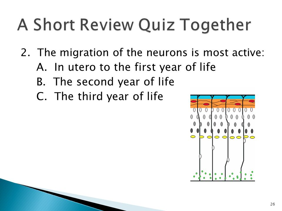 Answer: A. In utero to the first year of life 27