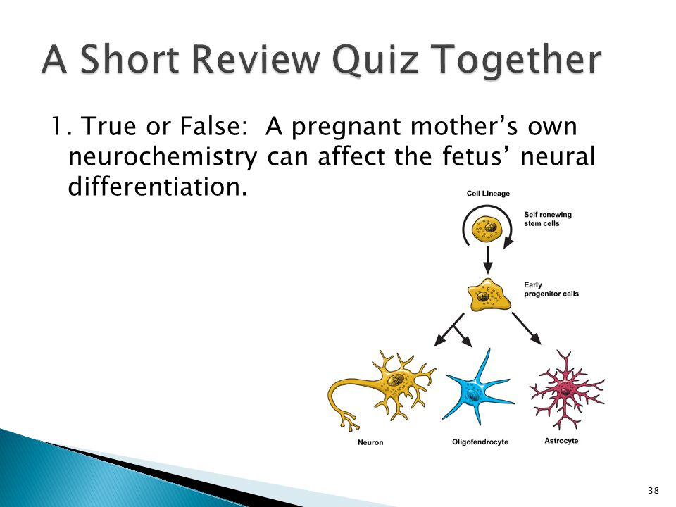 1. True or False: A pregnant mother's own neurochemistry can affect the fetus' neural differentiation. 38