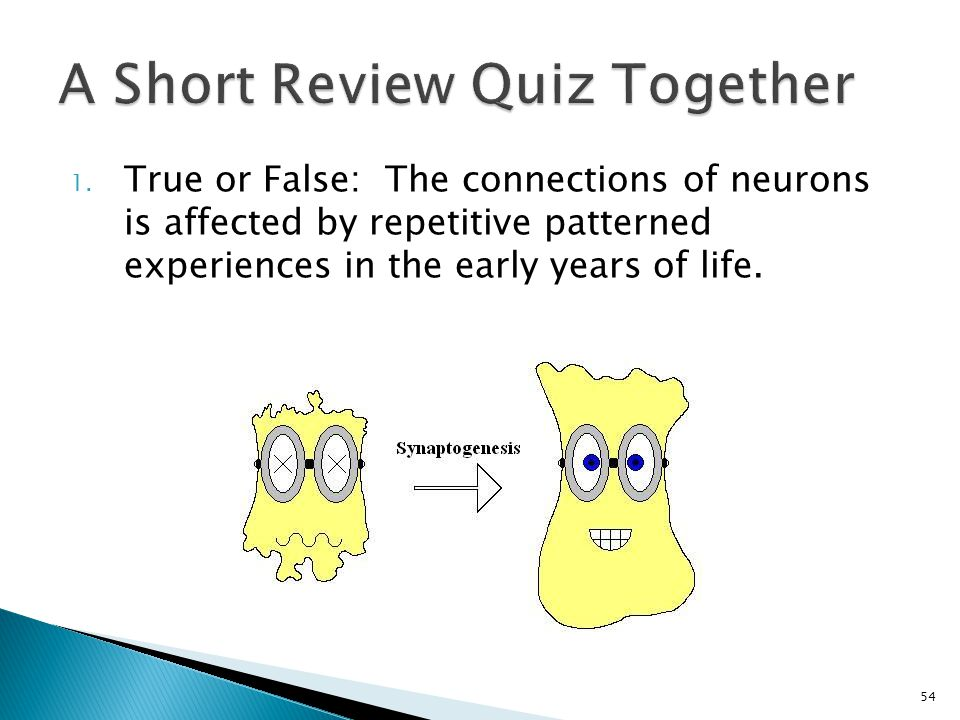 1. True or False: The connections of neurons is affected by repetitive patterned experiences in the early years of life. 54