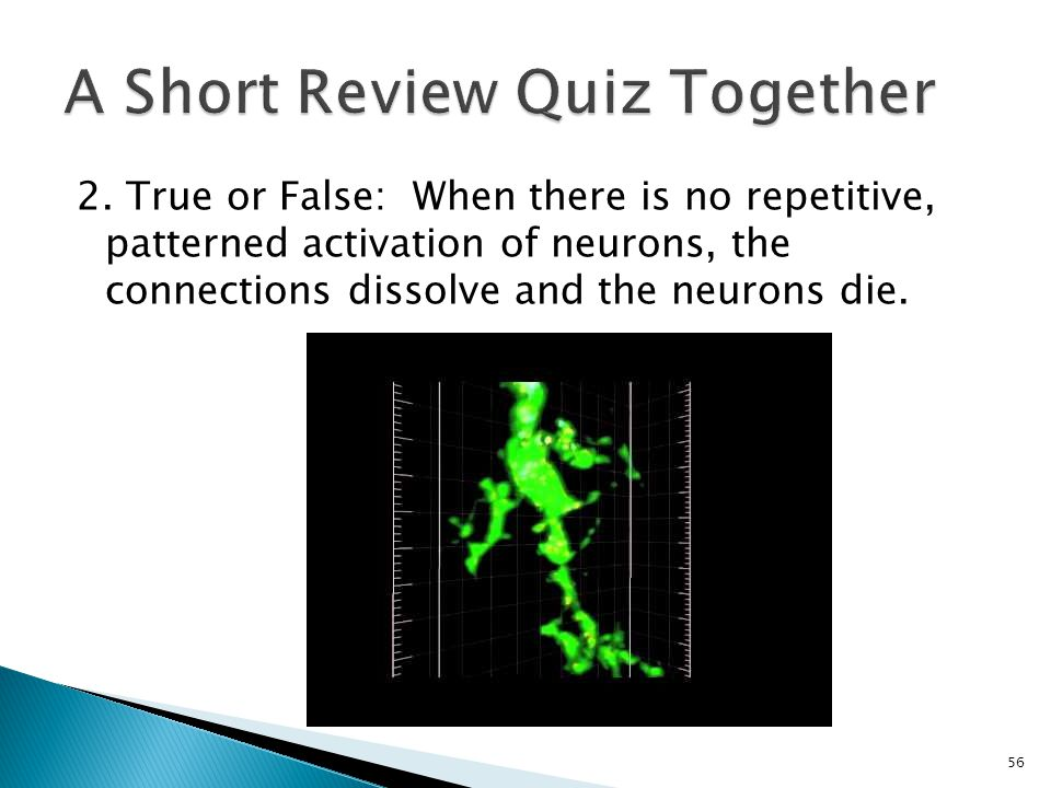 2. True or False: When there is no repetitive, patterned activation of neurons, the connections dissolve and the neurons die. 56