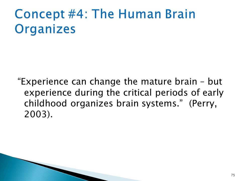 As the brain organizes, it requires specific patterns of activity to occur at specific times during development.