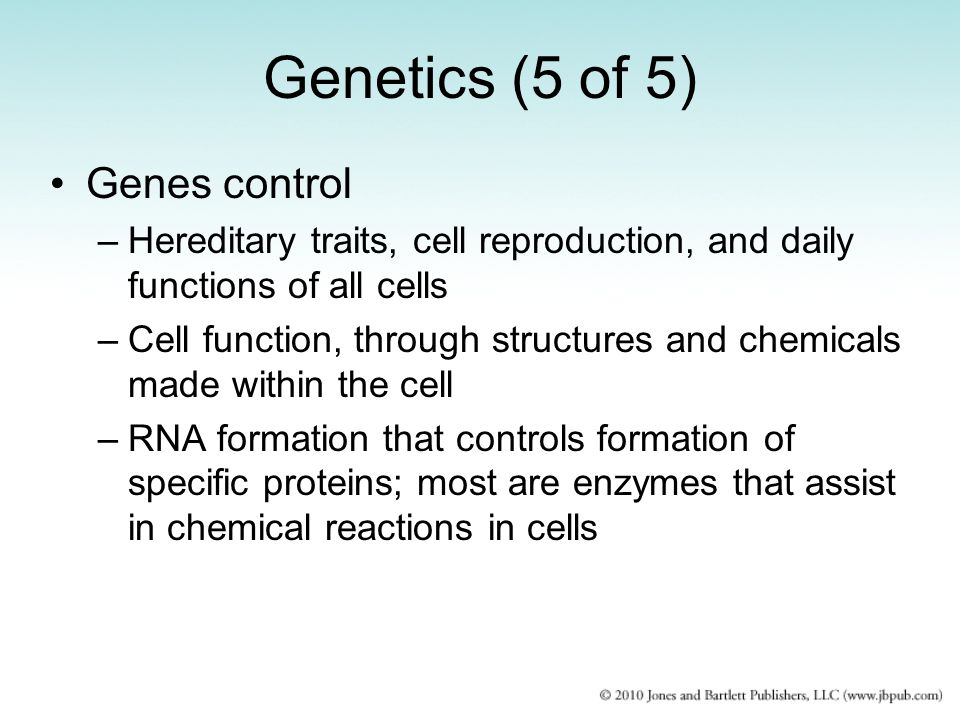 Genetics (5 of 5) Genes control –Hereditary traits, cell reproduction, and daily functions of all cells –Cell function, through structures and chemicals made within the cell –RNA formation that controls formation of specific proteins; most are enzymes that assist in chemical reactions in cells