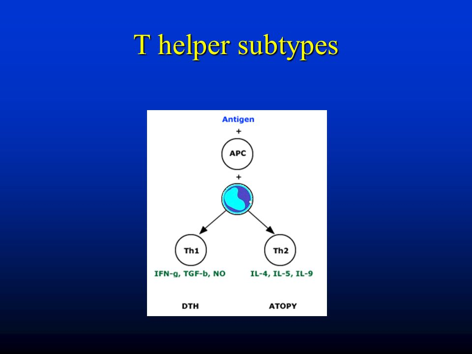 T helper subtypes