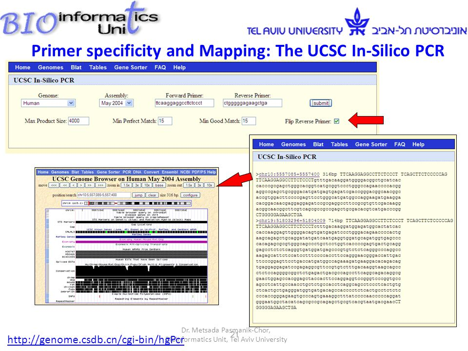 21 Primer specificity and Mapping: The UCSC In-Silico PCR Dr.