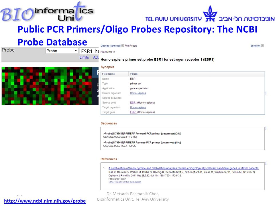 Dr. Metsada Pasmanik-Chor, Bioinformatics Unit, Tel Aviv University 23 http://www.ncbi.nlm.nih.gov/probe ESR1 human Public PCR Primers/Oligo Probes Re