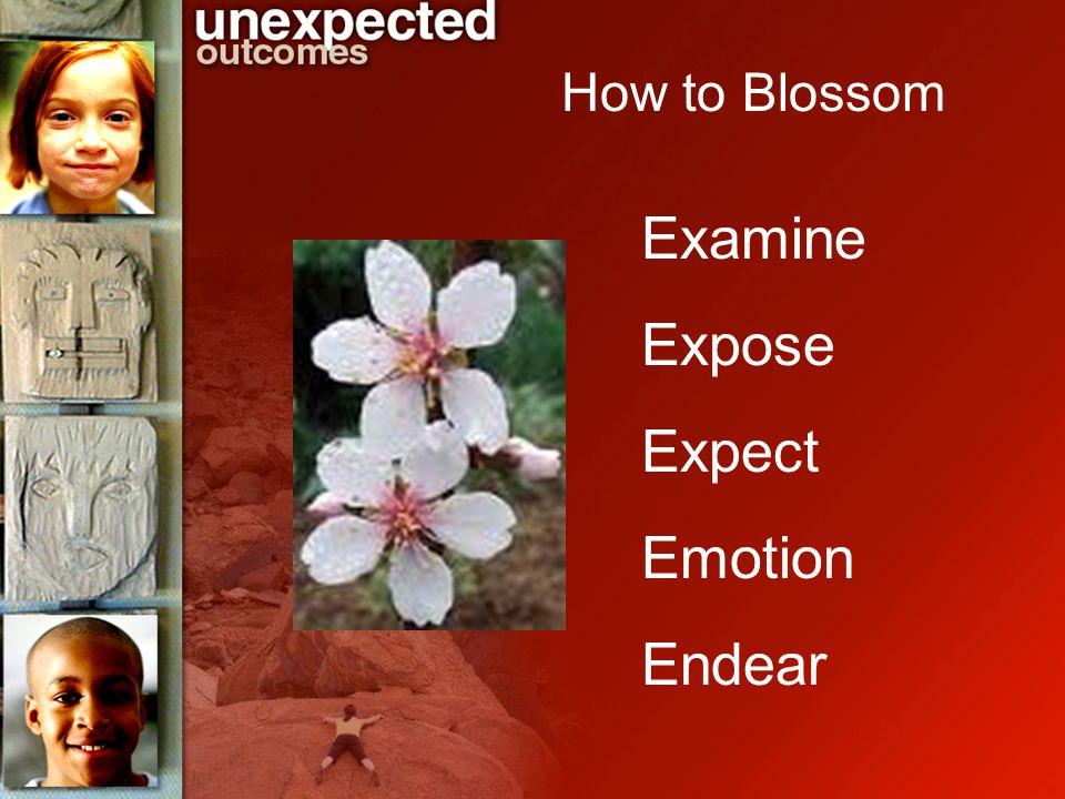 Examine Expose Expect Emotion Endear How to Blossom
