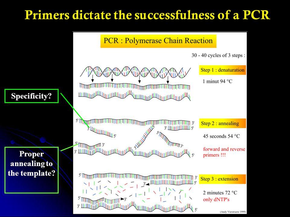 Web Site: http://okeylabimac.med.utoronto.ca/PUNS/ More Info: http://www.hsls.pitt.edu/guides/genetics/obrc/dna/pcr_oligos/URL1175092441/info Resources for PCR Primer Specificity Analysis – PUNS