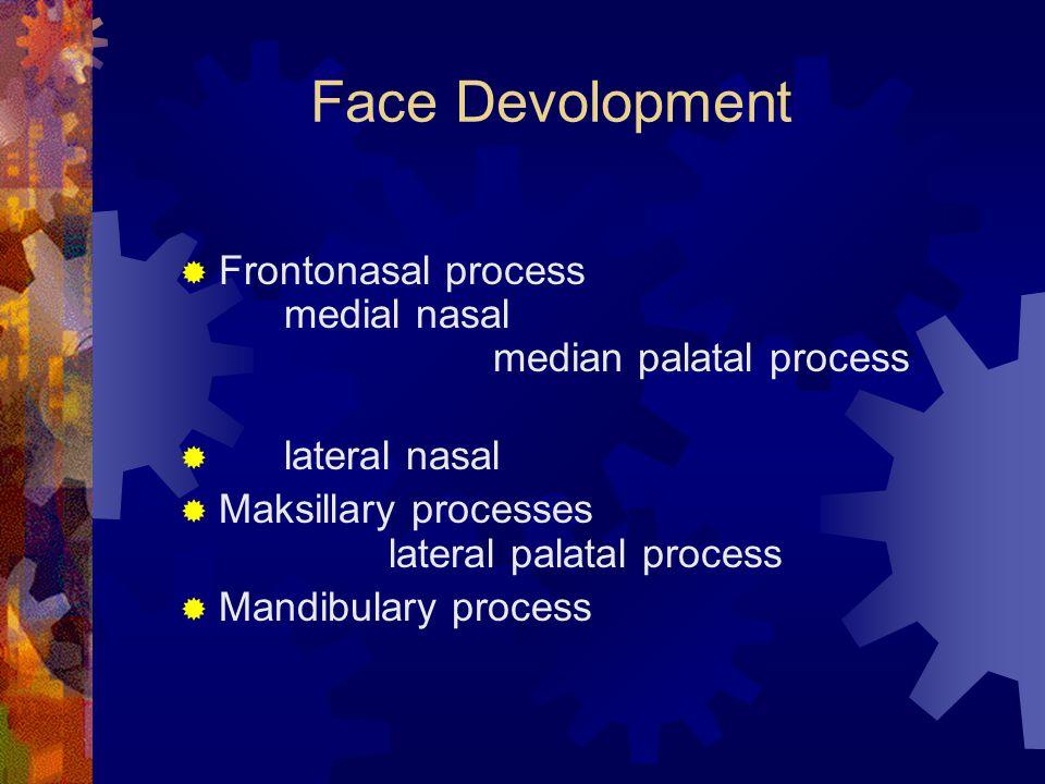 Face Devolopment  Frontonasal process medial nasal median palatal process  lateral nasal  Maksillary processes lateral palatal process  Mandibular
