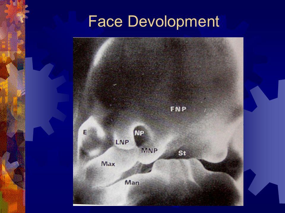 Face Devolopment